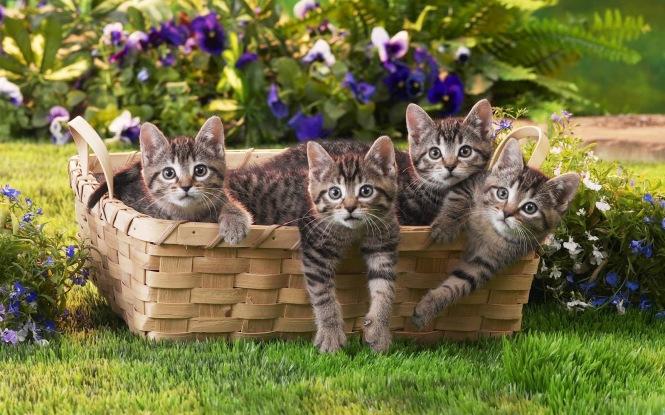 Kittens-in-a-basket